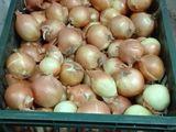 Lazi din plastic trainice, pentru recoltare/transportare/procesare prune, mere, struguri, cartofi