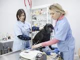 Servicii veterinare de la Clinica veterinara Esculap Vet