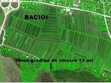Teren 12 ari in Bacioi
