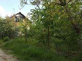 Vila-casa, cu teren pomicol, intr-o zona linistita