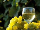 vînd vin de casă producție proprie