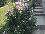 Se vinde casa in Peresecina cu toate conditiile, intr-o zona linistita a satului