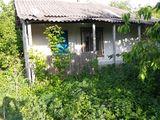 Loc pentru casa in centrul satului Ilenuta!