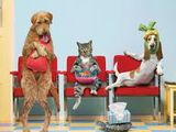 Medic veterinar.24/7 (Vizita medicului la domiciliu chis. si in afara orasului , servicii cabinet.)