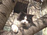 Котёнок Мейн-Кун на продажу!!!