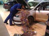 Автоэлектрик работы любой сложности!!