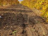 Se 5 hectare livada cu nuci