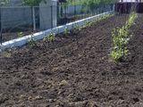 Teren pentru constructii Piatra Alba zona ecologica si linistita