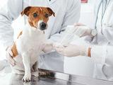 Servicii veterinare / ветеринарные услуги