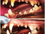 Стоматологические услуги вашим питомцам