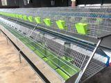 Custi pentru iepuri industriale China