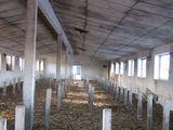 Se vinde incapere pentru producere sau depozitare, cladirea are 850 metri patrati