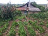 Urgent Casa in Buteni