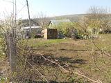 Продается земельный участок в садоводческом кооперативе