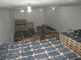 Chirie camere frigorifice