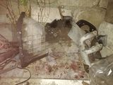 Vand piese auto la Ford Transit anul 2000