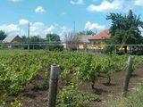 Vindem 2 case in stare bune ,Raionul Grigoriopol ,satul Malaiesti 4100 $