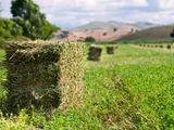 Teren agricol 10ha
