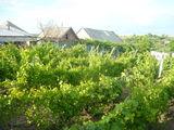 Casa de locuit cu gradina si vie la doar 22km.de la or.Chisina