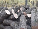 lemn tare de foc