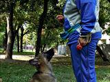 Воспитание и дрессировка собак - Бельцы