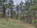 Продаются 3 участка площадью 36.4 сотки на берегу Данченского озера.