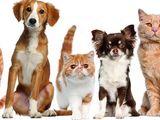 стрижка для собак и кошек