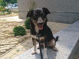 Собака Стрелка ищет человек -заботливый и хороший друг!!!