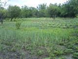 Дачный  участок - огород.   2 км от  Добружа.  6 соток - 500 евро.
