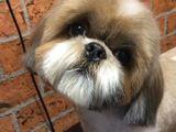 Стрижки собак,тримминг собак