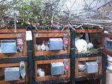 Продам кроликов разного возраста, есть беременные крольчихи, рабочие самцы и клетки для кроликов