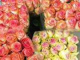 Super Pret . Trandafiri direct de la crescatori