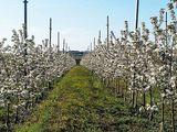 3 Гектара Земли - Яблочный Сад