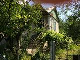 Дом дача в 3км от Крикова Пашканы (Криулянский район) Порумбены