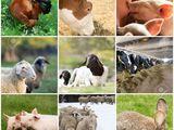 Suplimente pentru nutritie a animalelor,