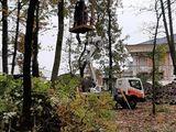 Резка деревьев - выкорчёвка Уборка дач. Taiem copaci, defrisarea -curatarea copacilor