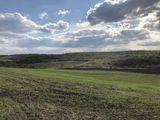 Teren agricol 3,7 ha, amplasat in  mun. Chisinau, linga s.  Bacioi. Investitia corecta a banilorDVS!