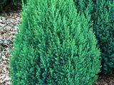 Plante pentru gradina la cel mai avantajos pret
