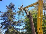 Taerea copacilor автовышка27m 18метра услуги