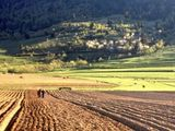 Se vind 9,9499 ha de teren agricol situat in r. taraclia, s. salcia