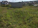 Se vinde teren 7 ari in Cricova, 21000 euro