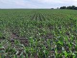 Arendam terenuri agricole arabile de la 200 ha !