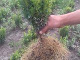 Plante Decоrative