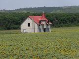 Vînd 7.5 ha de teren agricol cu casa