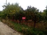 Большой  дачный участок в 9 сот в крузештах с персиковым садом