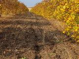 Se vinde livada cu nuci de 5 hectare