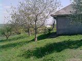 Продается дом + 50 сот земли в глодянском районе село яблона!