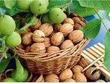 Продам ореховый сад.