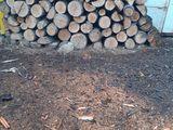 lemn de foc specie tare, uscate, facem si livrare la domiciliu.