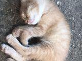 Отдам котят в хорошие руки!!!